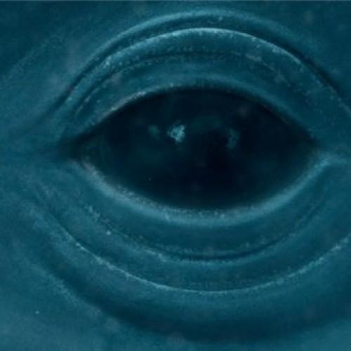 Whales in Oceans Frank Ocean — Blue Whale